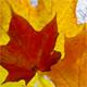 healingmirth: (fall)