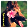 springwoof: 3/4 portrait of dog with flower by its ear (aloha)