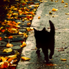 sholio: Black cat with autumn leaves (Halloween-black cat)