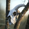 theoreticbeast: (skull tree)