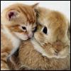 darthneko: kitten and bunny cuddling ([personal] bunnylove)