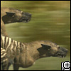 halialkers: Two extinct dog-like things with stripes and long muzzle (Skuld 1)
