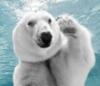 belyj_medved: (Медвед)