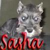 aprilvalentine: (Sasha)