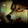 darkspirited1: brown wolf staring off into space (autumn) (Default)