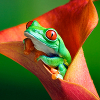 woggy: (Flower Frog)
