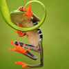 woggy: (Falling Frog)
