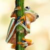 woggy: (Hanging Frog)