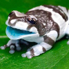 woggy: (Laughing Frog)