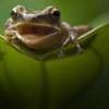 woggy: (Lurking Frog)