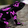 woggy: (Purple Frog)
