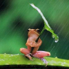 woggy: (Umbrella Frog)