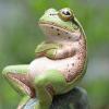 woggy: (Smug Frog)