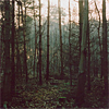 signifier: a misty forest view (Land: Into the Woods) (Default)