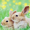 satinroseironthorns: (Bunnies)