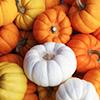 empty_marrow: (pumpkins)