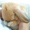 morganichele: bunny (sad bunny / hides)