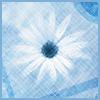 sisterxsunshine: (blue daisy)