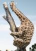 wild_irises: (giraffe)