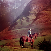 blamethewizard: (horse)