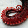 feathercircle: Photograph of red tentacle (tentacular spectacular)
