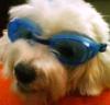 katstevens: (dogswim)