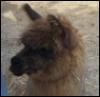 tygrestick: (llama!!)