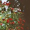 sourcherry: (precious illusions)