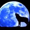 deeperwonderment: (Wolf Moon)
