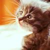 catsock: (pic#6752965)