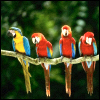 delight: line of parrots on a branch (the gang's all here)