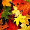 kay_brooke: (autumn2013)