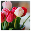writerlibrarian: Pretty tulips in shades of red and pink (Default)