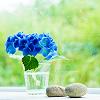 ext_1608492: (Blue)
