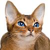 spiral_brow: (cat - default/happy)