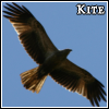 flamebyrd: (kite)
