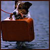 delight: dog holding suitcase in mouth (trippin')