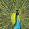 vlad: Peacock (Default)