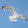 morphbox: (seagull)