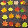parsemand: (leaves)