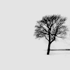 calculusletters: leafless tree in the snow (pic#679919)