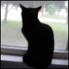 quixotic_crush: (La Chat Noir Baby)