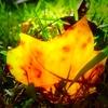 leafbyleaf: (leaf by leaf)