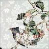 northsea: (little bird.)