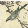 northsea: (bird, blossom.)