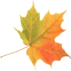 dragonheart: (Fall Leaf)