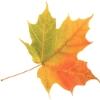dragonheart: (Fall Leaf)