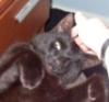 noodles: (Cat)
