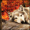 shadowwolf13: (Autumn Wolf)