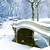 agraciado: (winter)